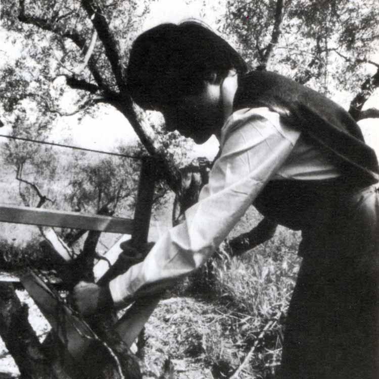Casa Loïc, le attività: il taglio della legna - Ombre e Luci n. 45 - 1994