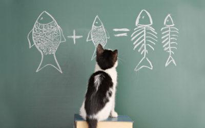 Il gatto sulla cattedra – Newsletter n. 16